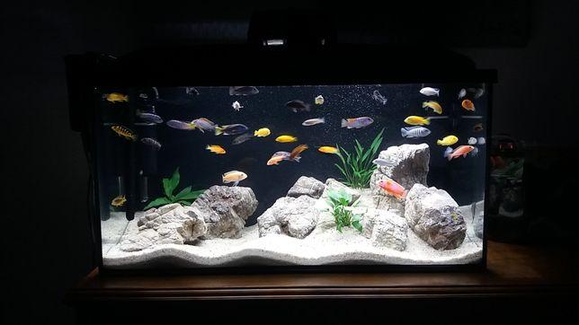 Akwarium Aquael 112 L z całym sprzętem+gratisy