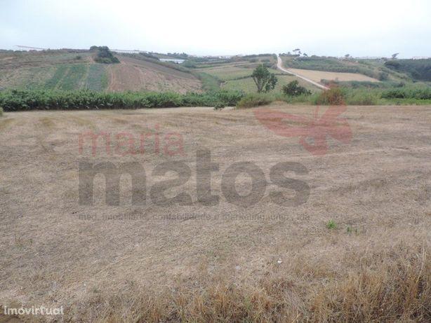 Conjunto de três terrenos agrícolas para venda perto da L...