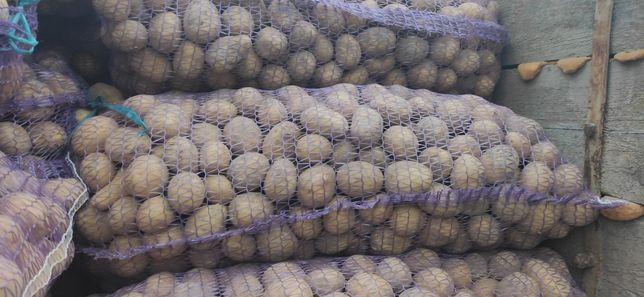 Насінева картопля Мадейра