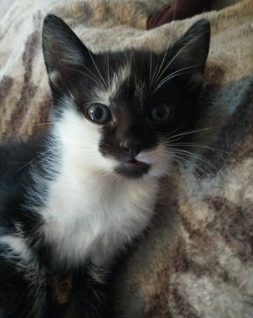 кошенята, коти, котята