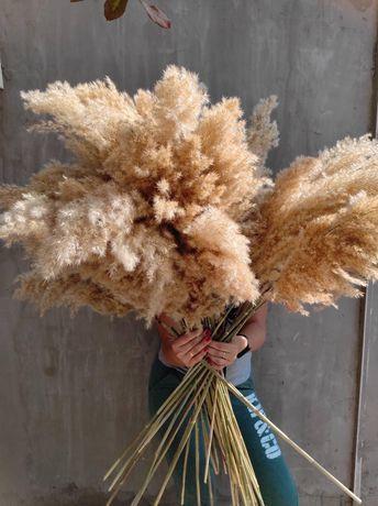 Тростник, сухоцвет тростника, пампасная трава