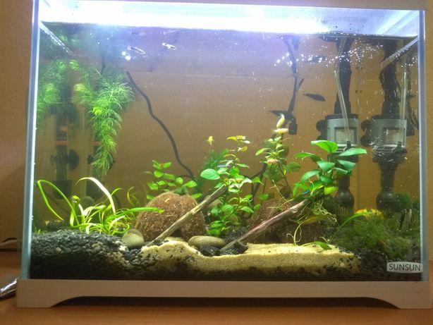 Акваскейп, акваріум,30 л,sun-sun