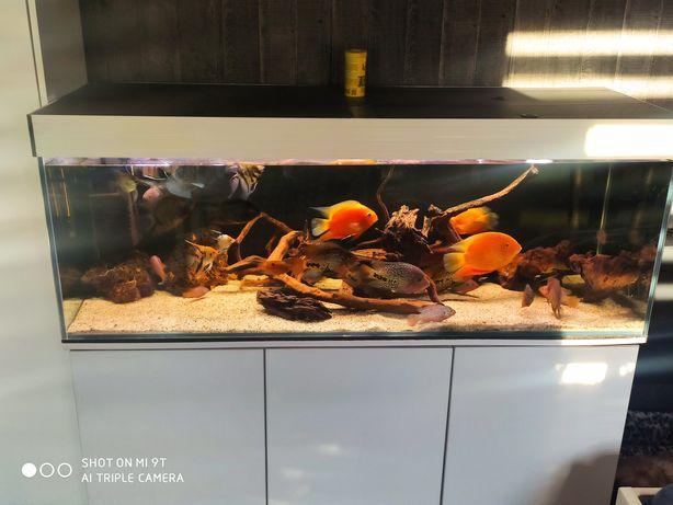 Korzenie do akwarium
