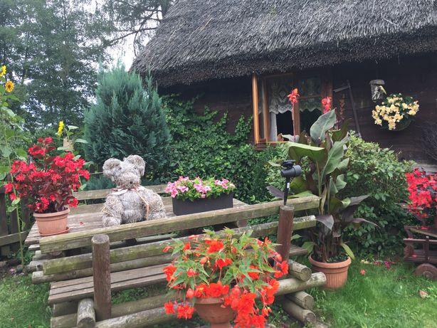 Bory Tucholskie-Chata pod strzechą- Agroturystyka