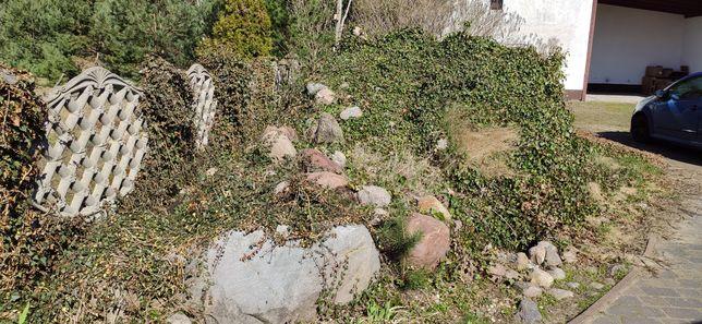 Kamień polny oddam duże małe skalniak fontanna