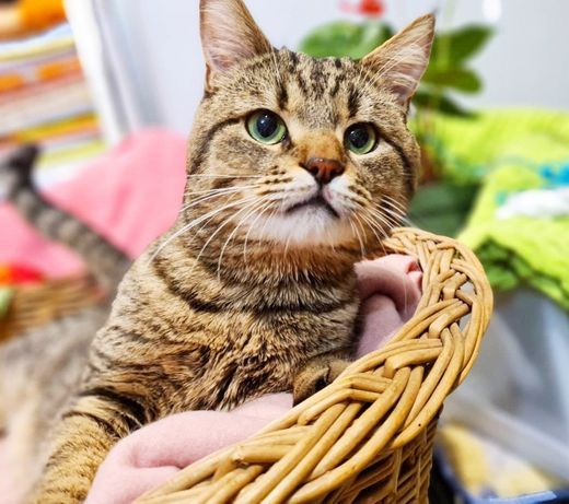 котик Нолик. кастрирован, 1 год. Кот, котята, котики, кошечка