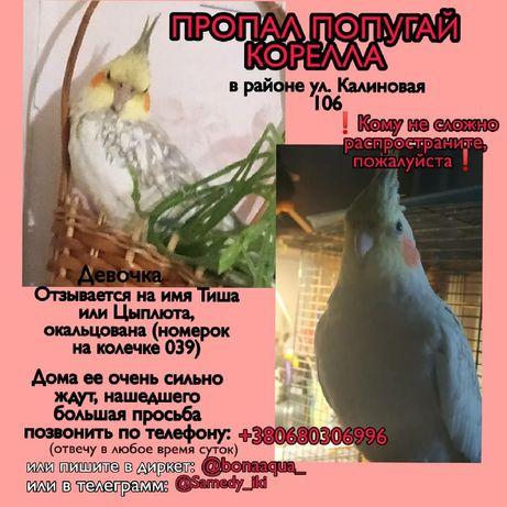 ПРОПАЛ попугай корелла ДНЕПР