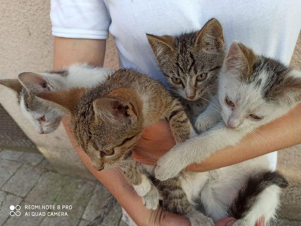 Kotki oddam w dobre ręce