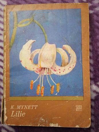 Lilie - K.Mynett