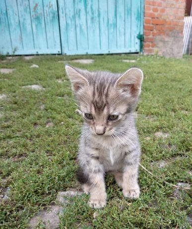 Віддам котика в хороші руки