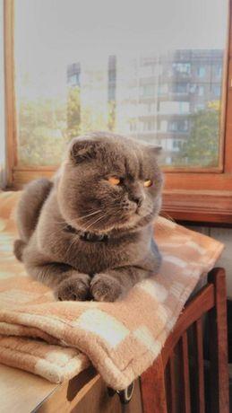 Молодой , красивый и независимый кот