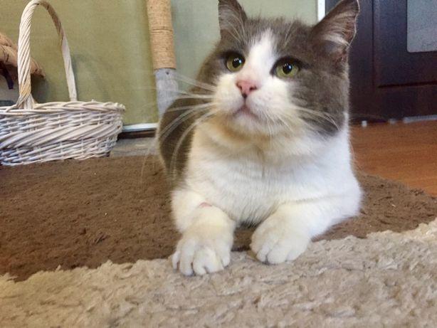 Огромный кот Костя ищет  семью