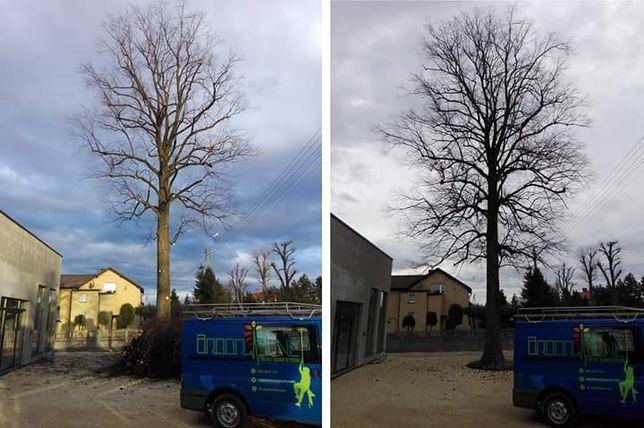 Pielęgnacja/Wycinka drzew / Arborysta / Koszenie