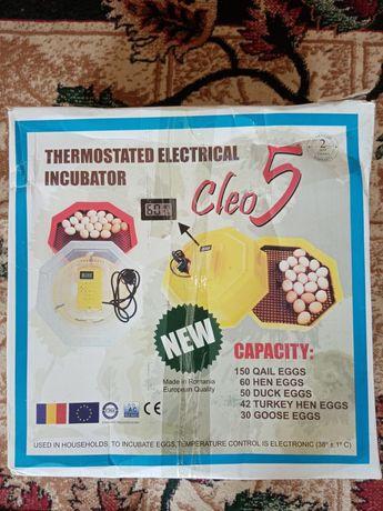 Румынский инкубатор CLEO - 5