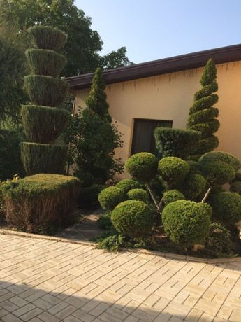 Обрезка деревьев, Услуги садовника, Уход за участком