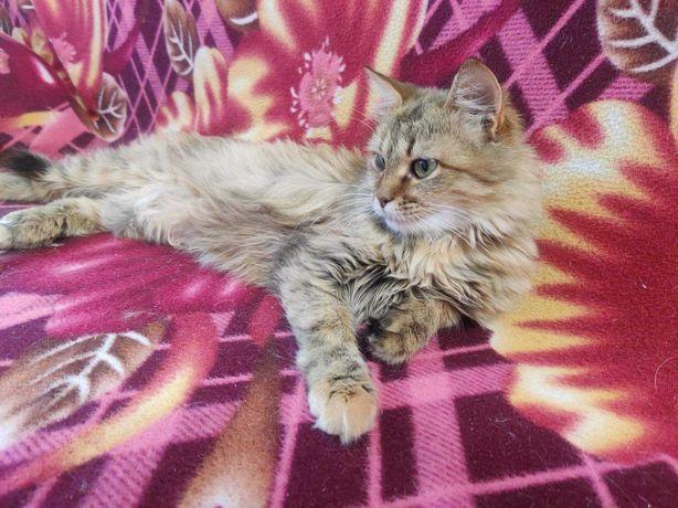 Очаровательная, молоденькая  кошечка 8 месяцев