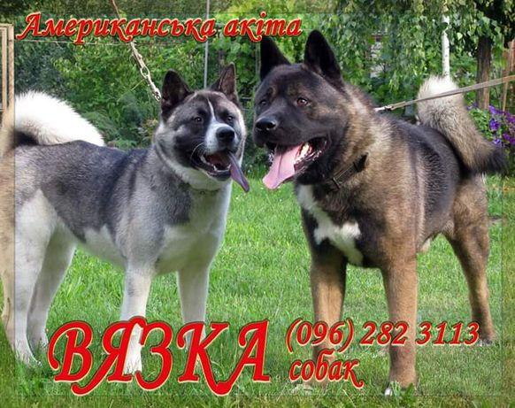 Вязка собак Кам'янець-Подільський