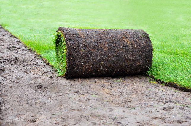 Trawa z rolki trawnik rekreacyjny