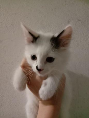 ОЧЕНЬ СРОЧНО! Котята в хорошие руки бесплатно. Отдам даром. Котенок.