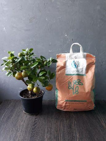 Цеолит - природный минерал для растений