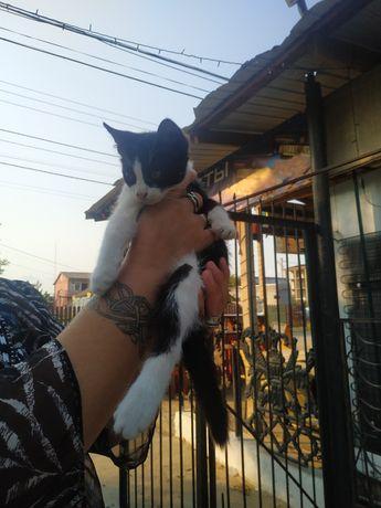 Котенок добрым людям