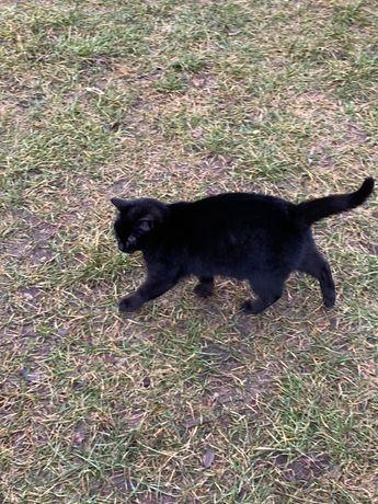 Czarny kot kocur - młody urodzony w sierpniu 2020