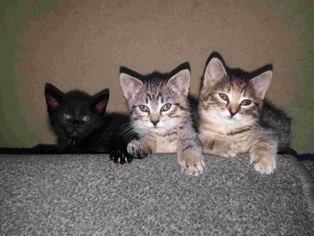 Kocięta kotki koty oddam w dobre ręce