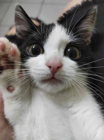 Котенок ищет дом. Котенок бесплатно. Котята.