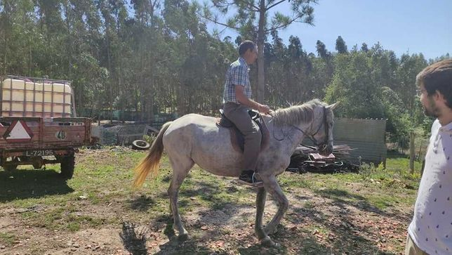 vendo égua montada e engata