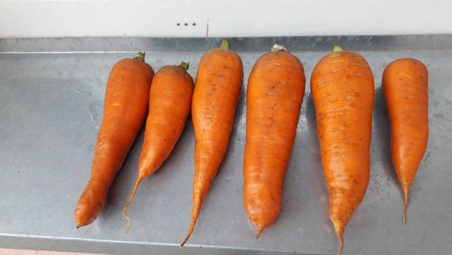 Морковь (выращенная без пестицидов) сладкая