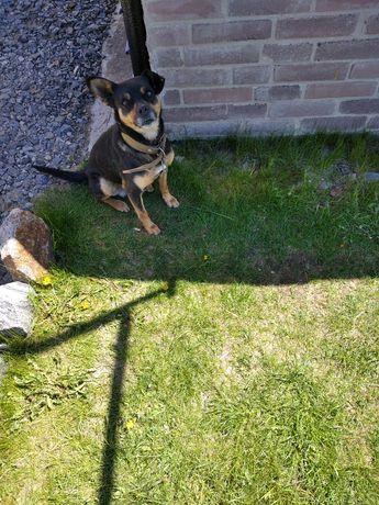 Приблудился собачонок потерялся ищет хозяина