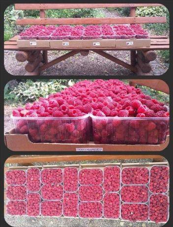 Malina owoce ekologiczne