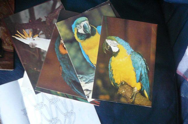 Kartki pocztowe zestawy PRL papugi, jaszczurki, rośliny ,owady, korale