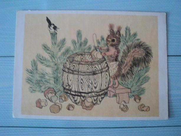 редкая открытка СССР 1964 Голубев белка