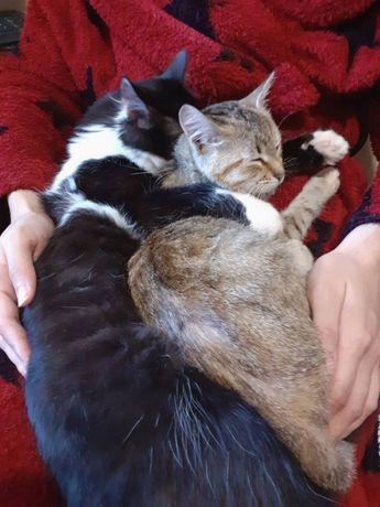Котята в добрые руки коты кошки котенок