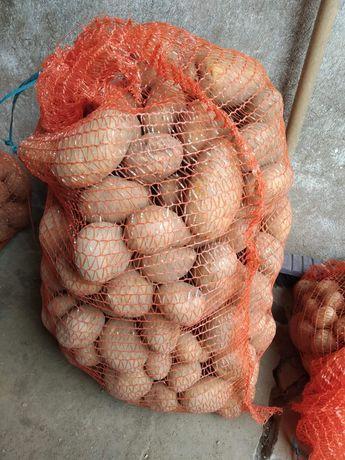 Sprzedam ziemniaka jadalnego