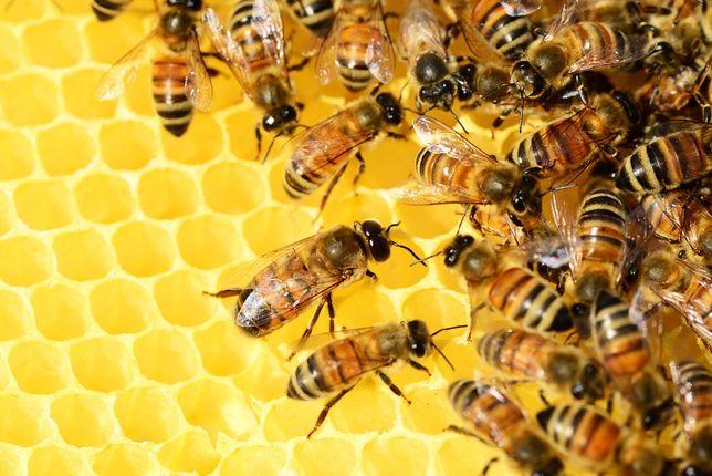 Мед домашний(цветочный)