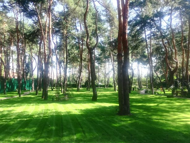 Рулонный газон.Уход за газоном и растениями.