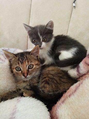 Два чудові кошенятка