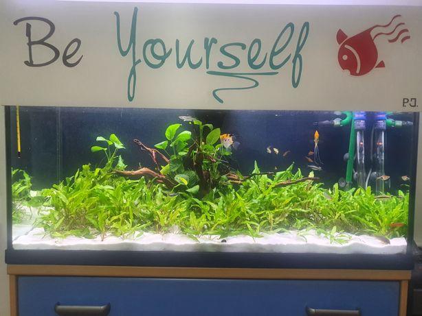 Planta aquário crescimento fácil