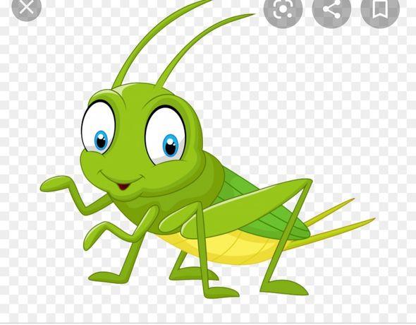 Сверчек банановый кузнечик корм для рептилий ящериц геконов ежей