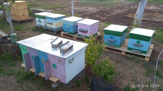 Продам пчел. Семьи