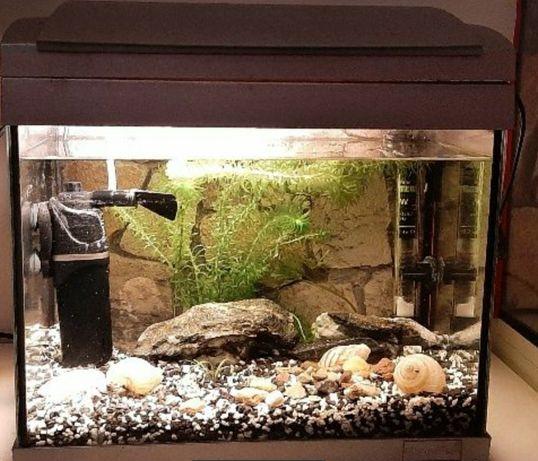 Akwarium z oświetleniem, grzałką i filtrem RYBKA GRATIS