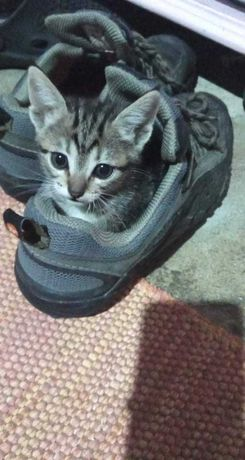 Oferta de gatinhos