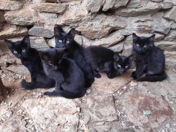 Gatos para adopção/Cats for adoption/Katten voor adoptie