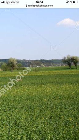 Продаж ,земельна ділянка Бородянка