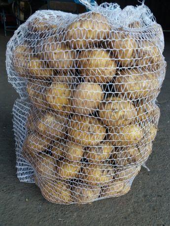 Ziemniaki młode bez nawozow od gospodarza 15kg
