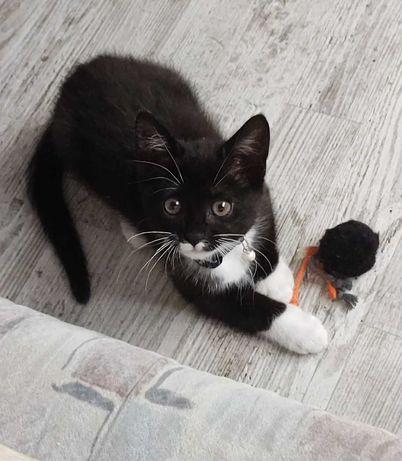 Zaginęła kotka!!