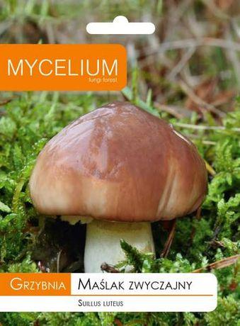 Maślak - Grzybnia grzybów leśnych