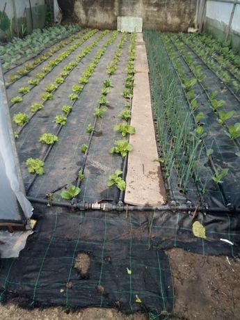 Estufa agrícola com tubagem galvanizada